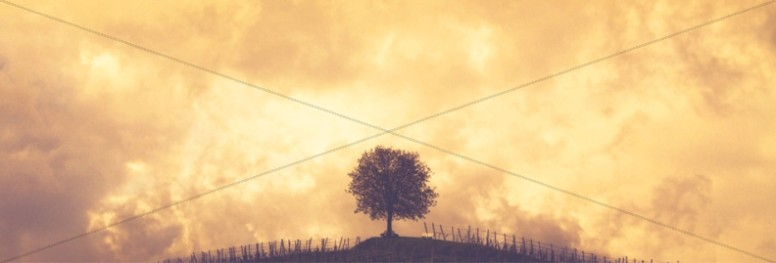Vine and Branches Religious Website Banner