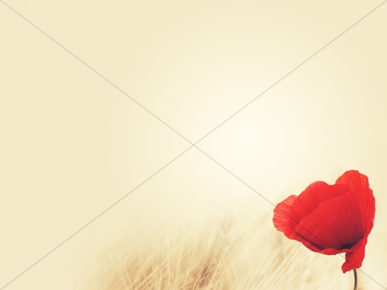 Remembrance Day Poppy Religious Background