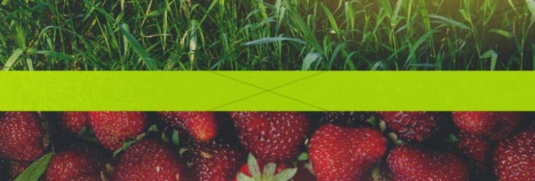 New Life Spring Strawberry Church Website Banner