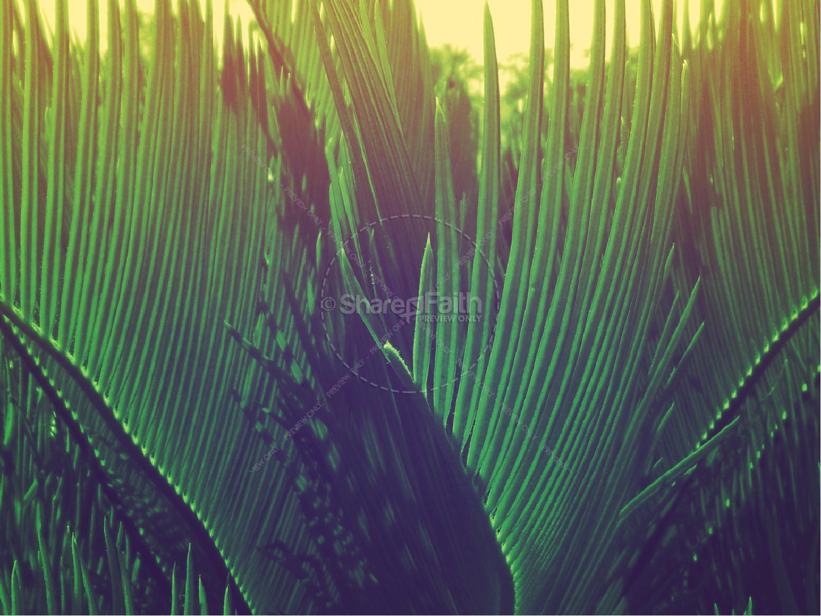 Palm Sunday Hosanna to the King Church PowerPoint | slide 6