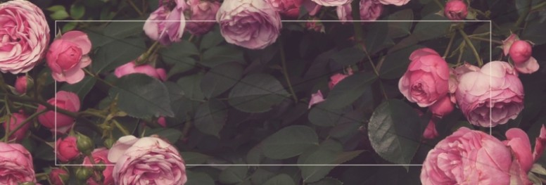 Bed of Roses Church Website Banner
