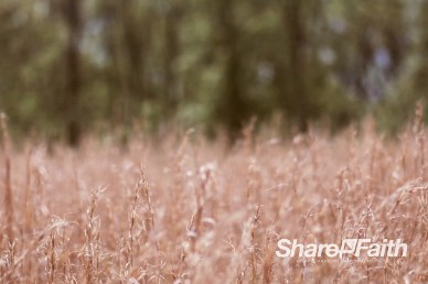Wheat Field Worship Motion Background