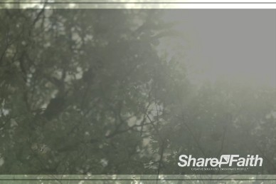 Swaying Trees Church Worship Video Background