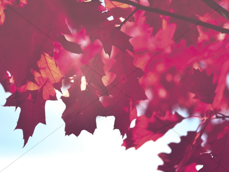 Autumn Leaves Worship Background