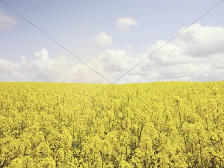 Field of Flowers Church Worship Background