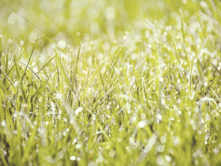 Morning Dew on the Grass Worship Background