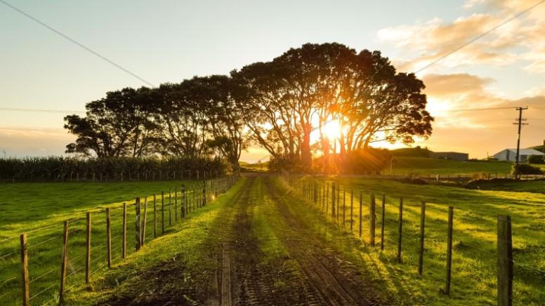 Sunset Through the Trees Religious Stock Photo