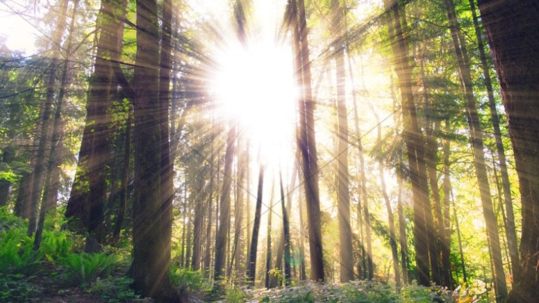 Sunlight Rays Bursting Through the Forest Trees Church Stock Photo