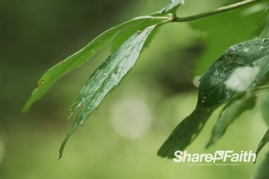 Forest Leaves Up Close Nature Video Background