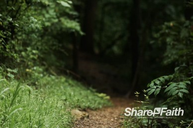 Forest Path Nature Video Loop