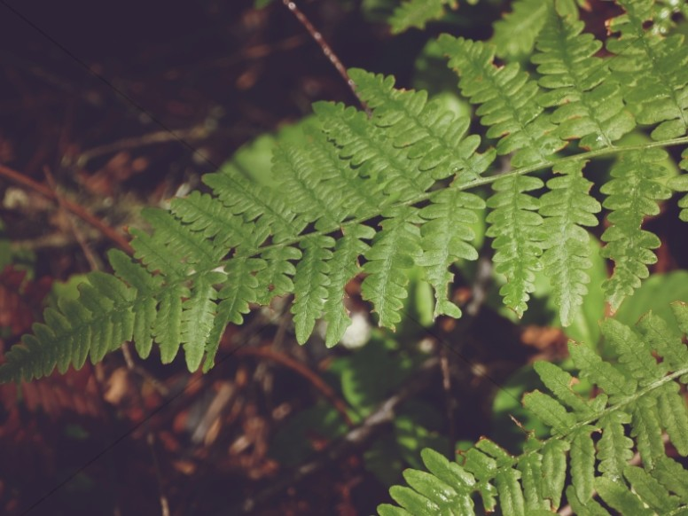 Forest Fern Leaves Nature Background