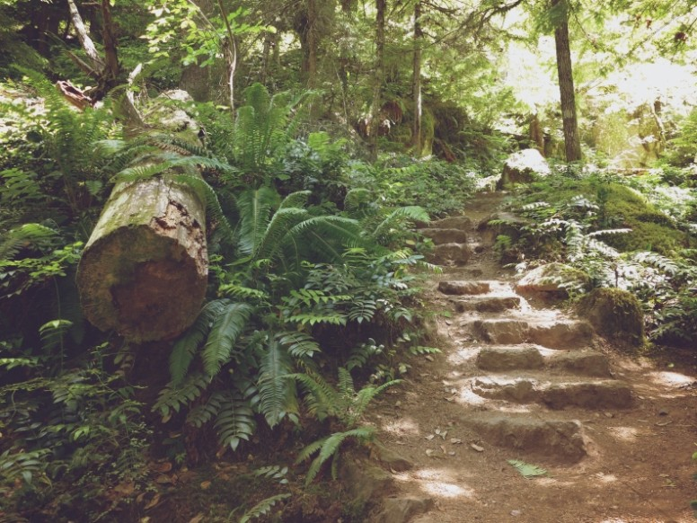 Forest Stairway Nature Worship Background