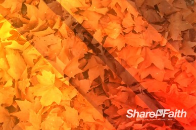 Autumn Leaves Worship Video Background
