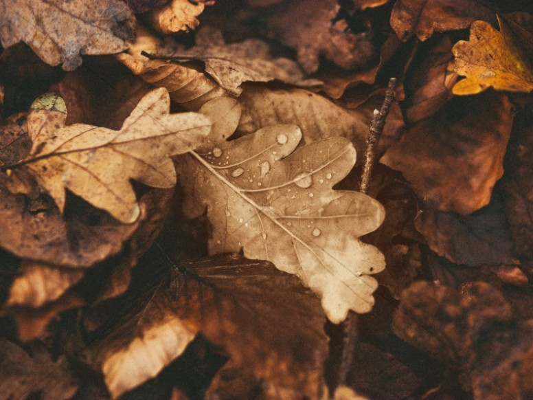 Sepia Tone Autumn Leaves Church Worship Background