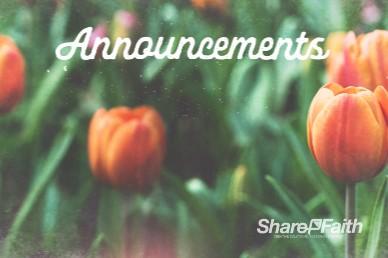 Spring Forward Tulip Announcements Bumper Video
