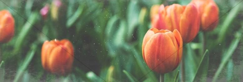 Spring Forward Tulip Church Website Banner