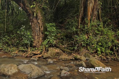 Tropical Forest Creek Worship Motion Background