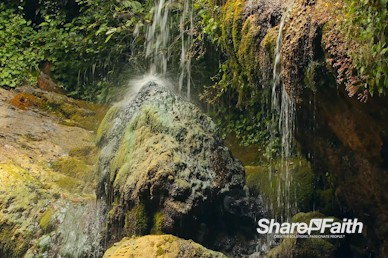 Forest Spring Nature Worship Motion Background