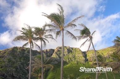 Swaying Palm Trees Worship Motion Background