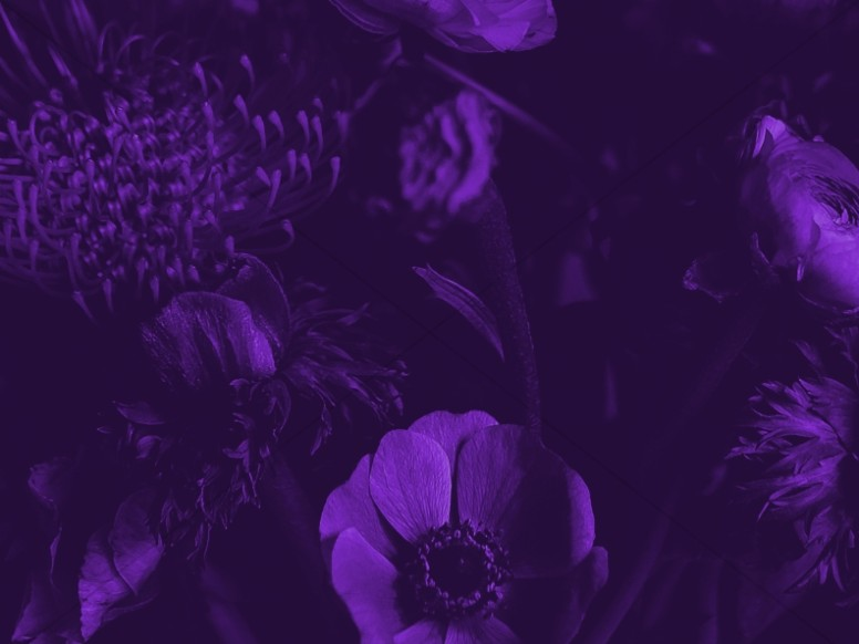 Mother's Day Flower Purple Worship Background