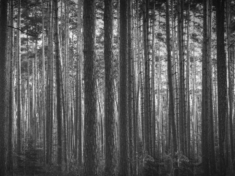 Black And White Trees Worship Background