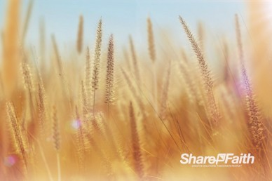 Thanksgiving Harvest Worship Video Background