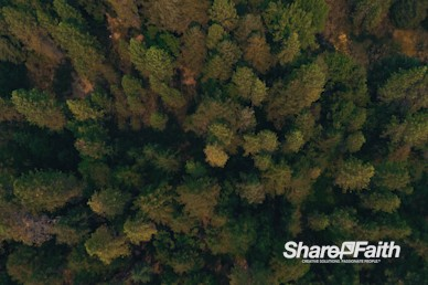 Forest Trees Aerial Nature Video Background