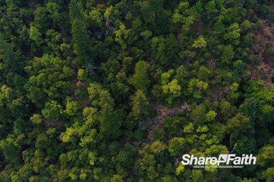 Treetops Aerial Nature Video Background