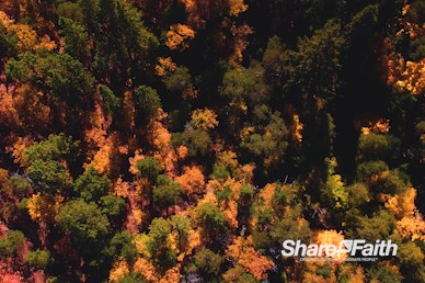 Autumn Forest Nature Video Background