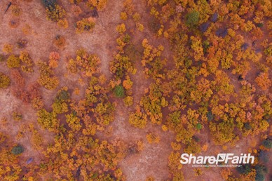 Autumn Forest Aerial Nature Video Background