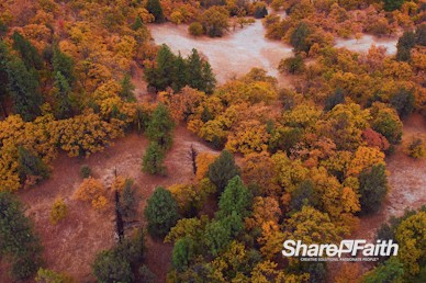 Autumn Forest Foliage Nature Background Video