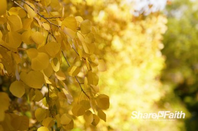 Yellow Fall Foliage Nature Video Background