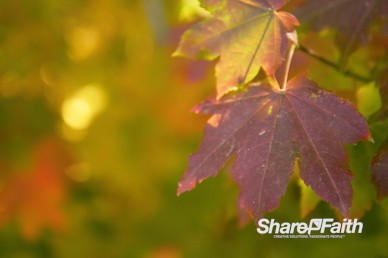 Autumn Leaves Nature Background Video
