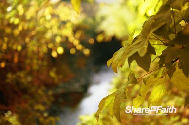 Yellow Autumn Leaves Nature Background Video
