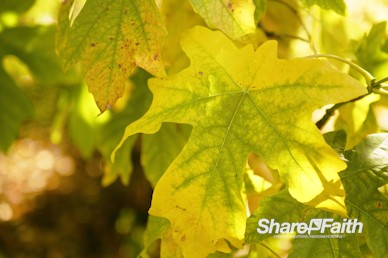Autumn Foliage Nature Worship Video