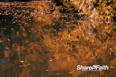 Autumn Pond Reflection Nature Worship Background Video