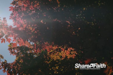 Fall Breeze Nature Video Background