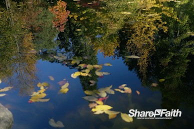 Autumn Forest Reflection Nature Background Video