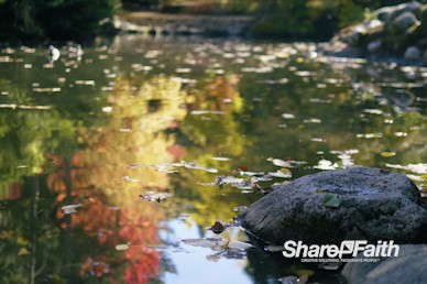 Floating Autumn Leaves Nature Background Video