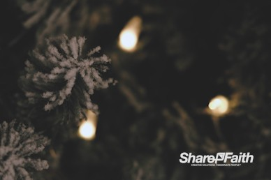 Frosted Christmas Tree Worship Video