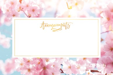 Mother's Day Cherry Blossom Announcements Motion Graphic