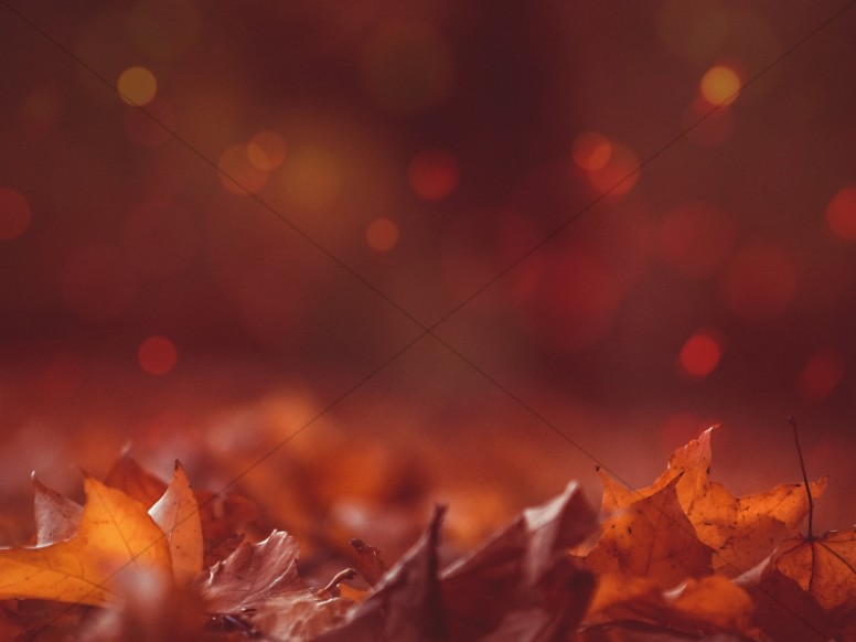 Autumn Leaves Bokeh Worship Background