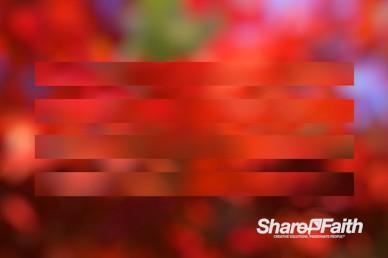 Red Stripe Bokeh Motion Background
