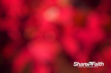 Deep Red Bokeh Motion Background