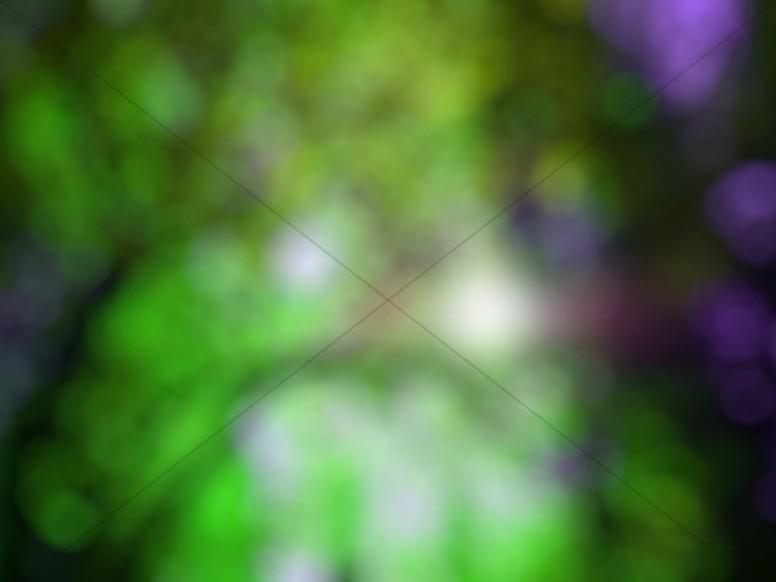 Leafy Green Bokeh Worship Background