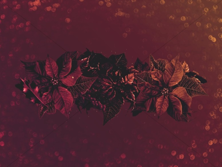 Merry Christmas Holly Worship Background