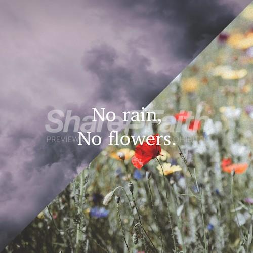 No Rain, No Flowers Social Media Graphic