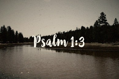 Psalm 1:3 Scripture Mini Movie