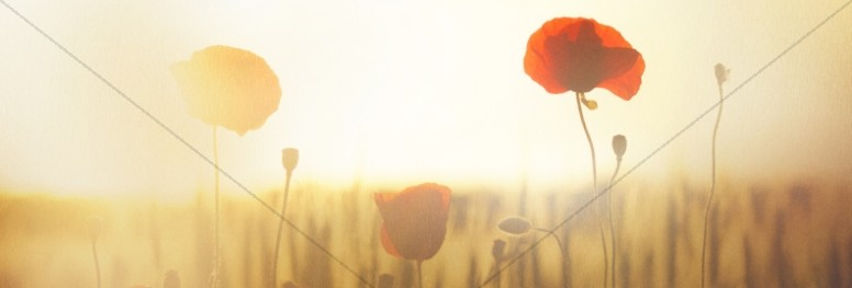 Lest We Forget Poppy Website Banner