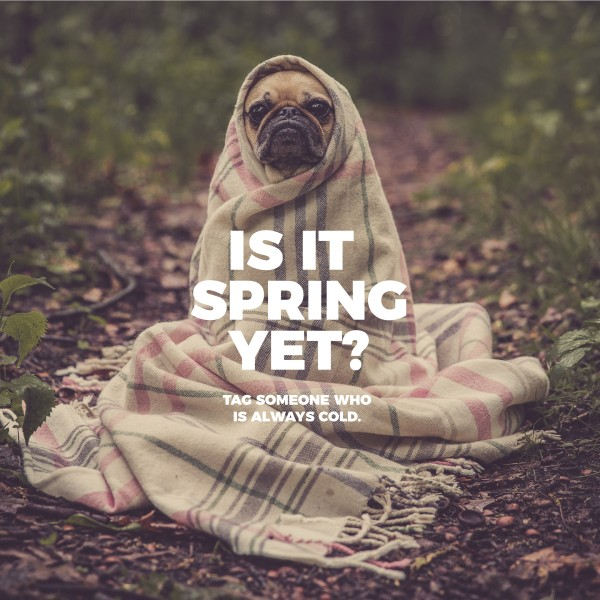 Is It Spring Social Media Graphic